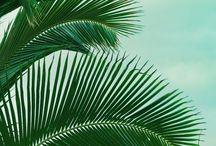Palm Trees by Terra Nova