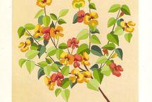 Motifs francaises tracées / Arbustes floreaux - Herbarium/Herbier -