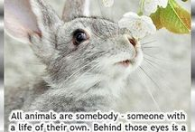 thoughts about and from animals