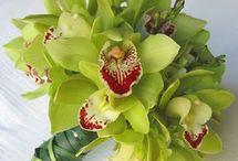 Plants-Flowers / by Michelle L. Castillo