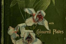 ~Orchids~