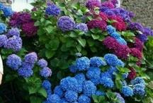 Leefplezier / Van bloemen wordt je vrolijk.