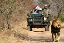South african Safari / Nature