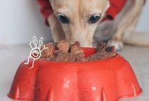 Receitas cachorro / Biscoitos