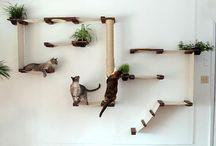 Centro de juegos gatos