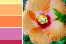 Colours/art / Colours