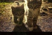 Cute kitten ever
