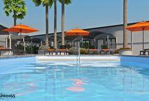 The Palm Springs Hotel / by The Palm Springs Hotel