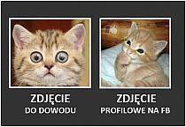 Fajne Koty