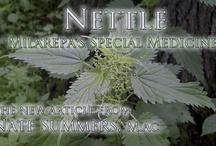 Herbal Medicine / by MedicineCrow.com
