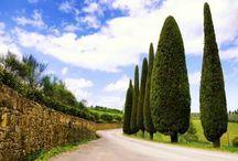 Food,Wine & Nightlife Tuscany Tours