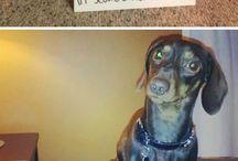 Humor animali