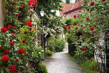 Gotland Visby / Kuvia ihanalta ruusujen saarelta.