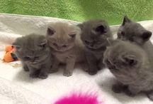 Cat, kitten