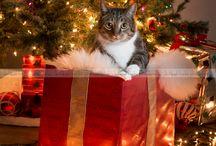 Katzen und Weihnachten