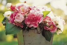 Peônias, minhas flores favoritas / by Mundo Da Arte Atelier