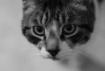 My sweeeeeety cats ^_^