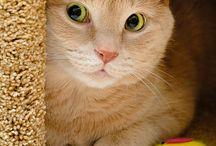 Kitties... / by Ellen Carter, Broker