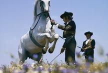 Andaluzie koně