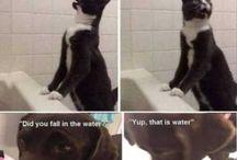 Funny pics