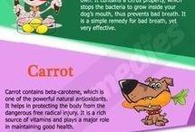 Healthy dog