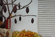 The Cocoa Pod Shop / Everything about cocoa pods, WWW.cocoapodshop.com