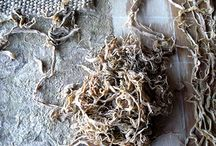 Fibers for Hand Paper Making