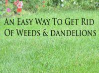 How doesyour garden grow