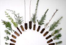 Plants & Garden / by Meghan Boyer