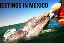 Prevue Meetings - Mexico / Destination Experiences in Mexico for Meeting Planners and Travel Professionals #Mexico #Travel