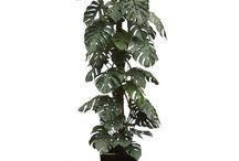 Plants for Jungle themes / Now and again we get asked, which artificial plants or artificial trees do you have that look like they have come straight out of a jungle. On this board we have compiled a list of the plants and trees we have that will work for your jungle theme.