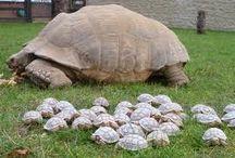 I love turtles.....all kinds of turtles / by Kathryn Keliinoi