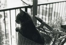 Kitties / by Dulcie Emerson