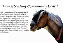 "Homesteading Community / This is a group board of homesteading and self-sufficiency topics (livestock, off-grid, diy, etc.). No gardening or food preservation pins, please, there are plenty of other boards for those topics. Please pin no more than five posts at a time. To join, follow me on Pinterest (Kathi OakHillHomestead), and email kathi.pinboard@aol.com with ""join Homesteading Community board"" as the subject, using the email address you used to join Pinterest. / by Kathi OakHillHomestead"