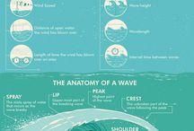 surf anatomy
