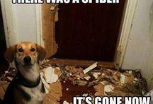 Hunde-Humor