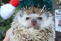 Creatures of Christmas! / It's not only us humans- animals of all shapes and sizes like to (sometimes) get into the Christmas spirit too! / by Backyard Chicken Coops