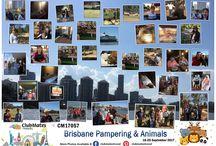CM17057 Brisbane Pampering & Animals