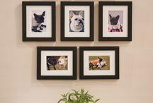 Pet deco wall gallery