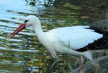 Lia fotografie: Vogels