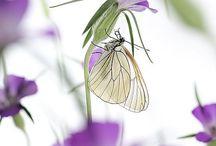 Papillons Stéphane Hette