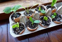 Gardening / Beautiful and functional gardens & visual gardening tips to help you in your own garden.