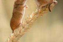 Souris, rats mignons..