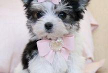 Cute puppies / by Toya McFarlane
