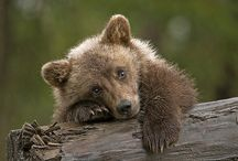 Bipolar Bears / Incredibly stupid behavior that is harmful to bears by reinforcing an association between humans and food. A fed bear = a dead bear. Don't do this. / by Edna Gooden