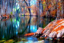 Autumn  / by Dana Adams