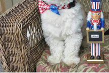 Patriotic Pets / From the Fourth of July and Memorial Day to military dogs, we bring you the pets that make us proud to be American.