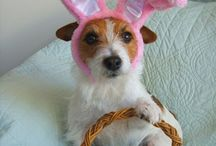 easter ideas / by Deb T