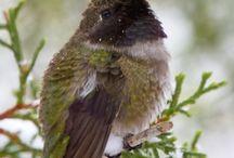 Birds / by Cindy Key