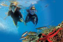 Snorkeling en France